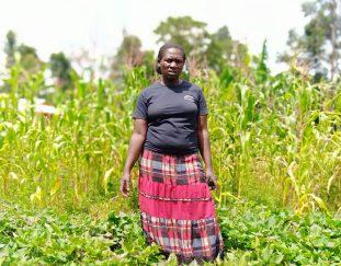kakamega-farmer-decry-lack-of-market-for-her-produce-2