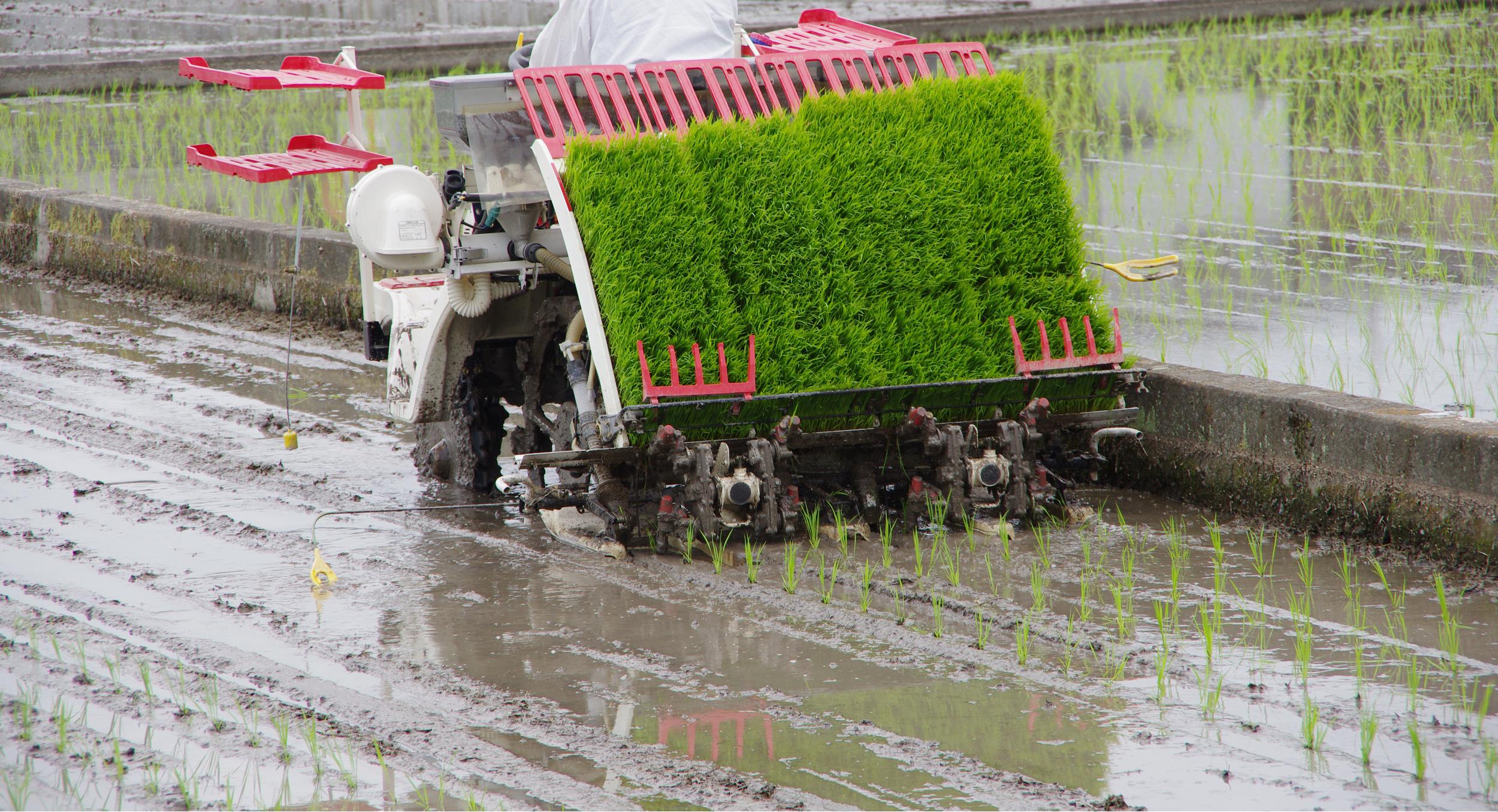 rice-transplanter