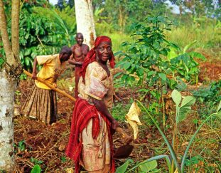 ksh-149-m-issued-to-small-scale-farmers-in-climate-smart-agriculture-programme