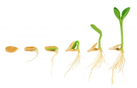3-techniques-that-can-overcome-seed-dormancy