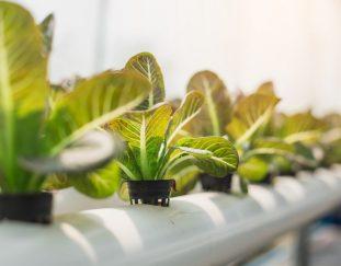 taking-up-soil-less-farming-technology
