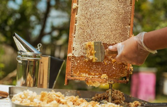 must-read-how-to-maximize-your-honey-production