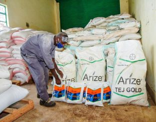 farmers-in-kirinyaga-adopt-bt-cotton-after-ginnery-is-revived