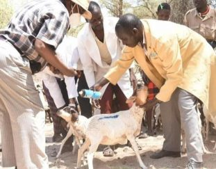 fao-donates-assorted-drugs-and-vaccines-for-livestock-treatment