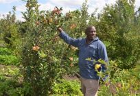 Find Out How a Laikipa Farmer is Making A Fortune in Rare Fruits Farming