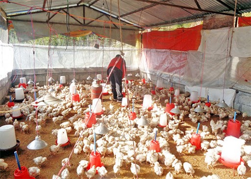 5-keys-to-successful-poultry-farming