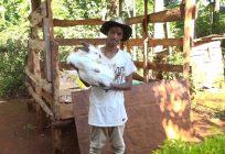 22-Year-Old Making a Killing in Hybrid Rabbit Farming