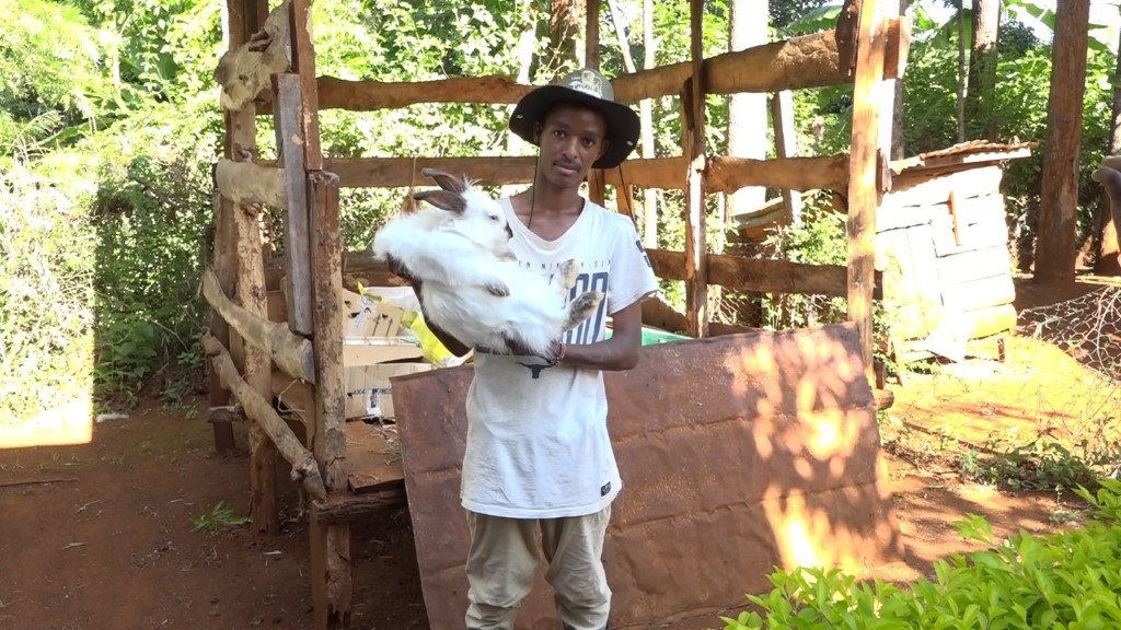 22-year-old-making-a-killing-in-hybrid-rabbit-farming