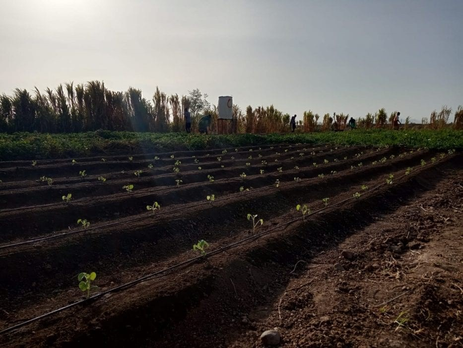 how-25-year-old-is-transforming-desert-land-to-food-farms