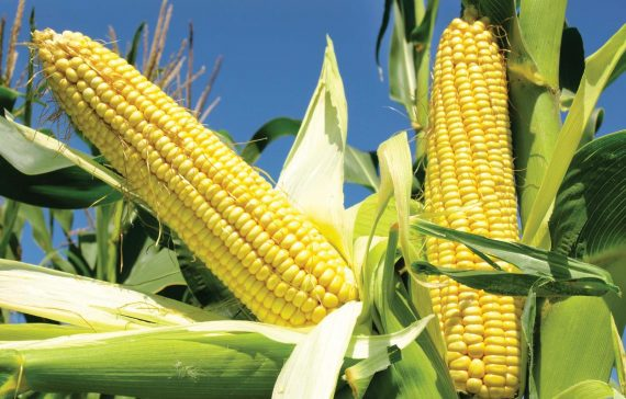 8-tips-to-increase-your-crop-yield