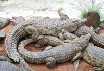 The Lucrative Market of Crocodile Farming.