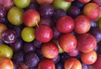 There's Value Addition in Growing Plums