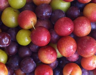 theres-value-addition-in-growing-plums