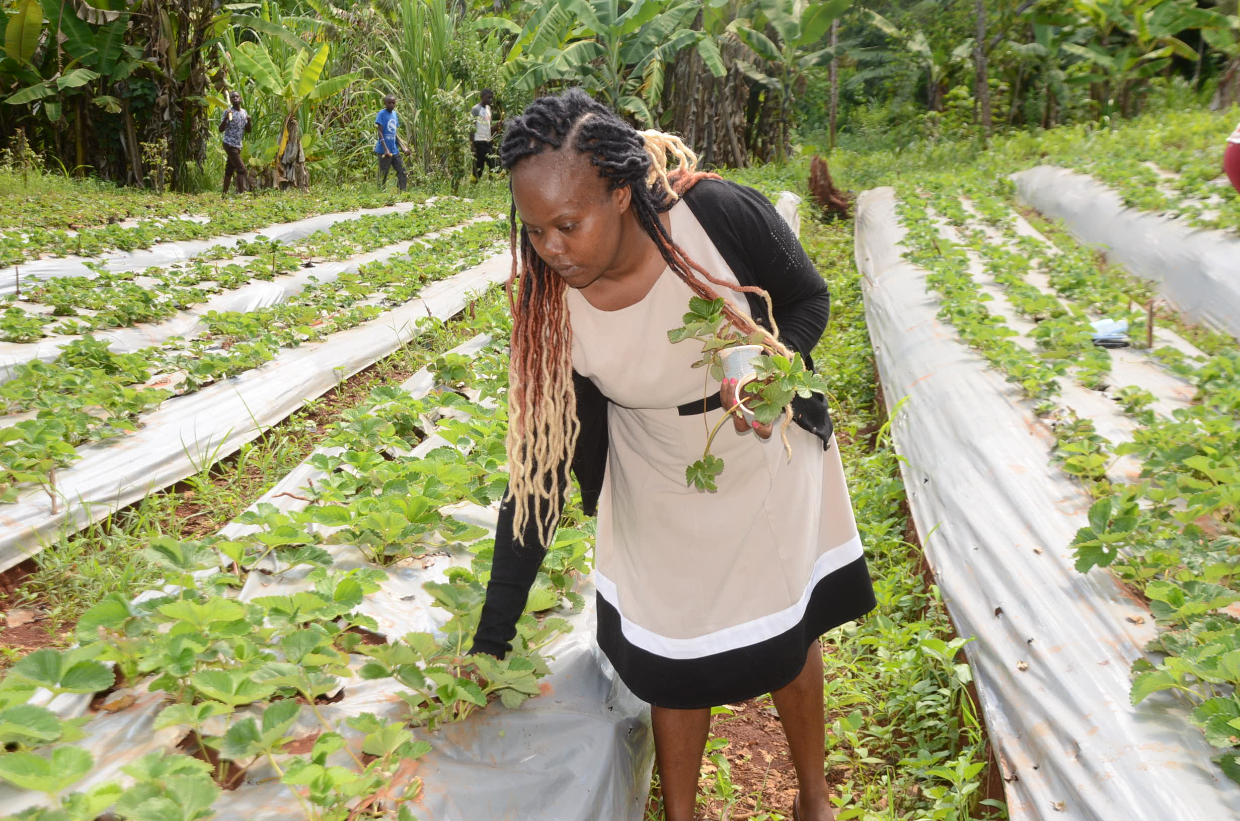 i-turned-to-strawberry-farming-after-losing-my-job