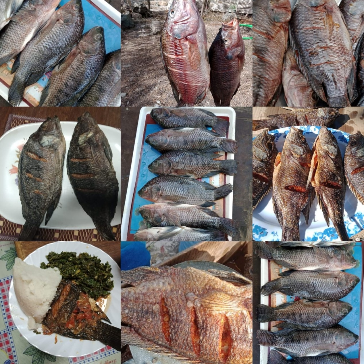 kenya-launches-first-aquaculture-academy